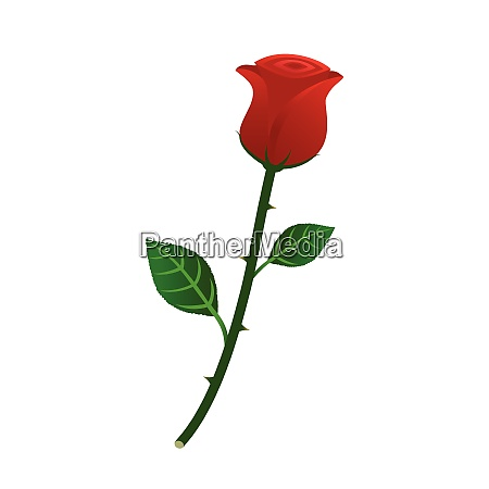 vector illustration of beautiful red rose