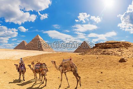 die pyramiden und kamele mit einem