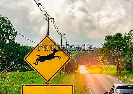 caution wildlife crossing sign beside