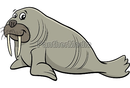 walrus wild animal character cartoon illustration