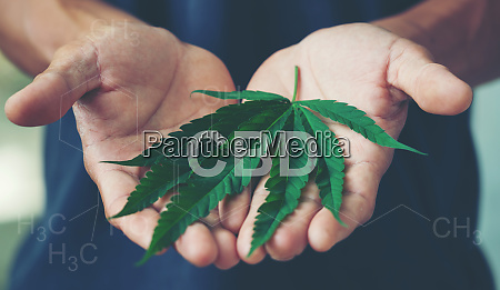 hand halten marihuana blatt mit cbd