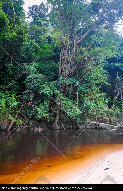 river, in, jungle, rainforest, taman, negara - 27287044