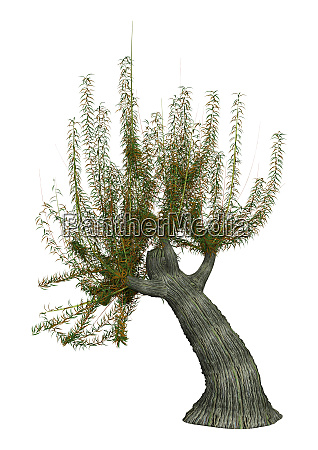 3d rendering white willow tree on