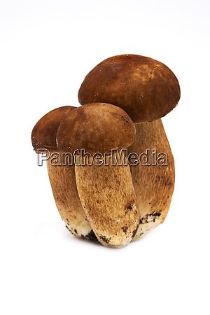 porcini mushroom on white background