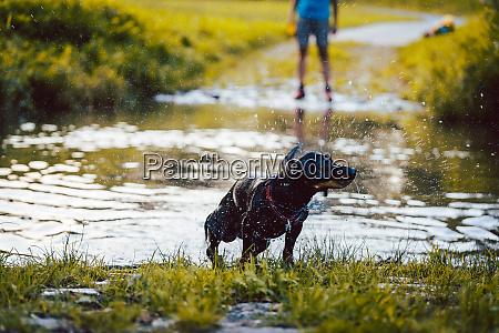 hund schwimmt durch einen teich
