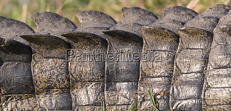 plates of armor on the back