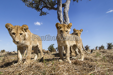 africa botswana chobe national park wide