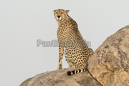 africa tanzania serengeti national park close