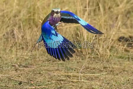 africa south africa kruger national park