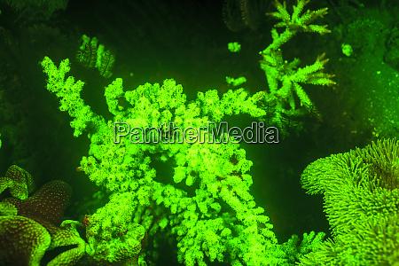unterwasser-seeleben, in, der, nähe, von, flughafen - 27328486