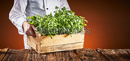 chef in a pizzeria carrying fresh