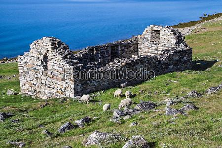 groenland hvalsey ruinen einer kirche aus