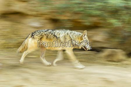 usa, , arizona, , arizona-sonora, desert, museum., blur - 27337732