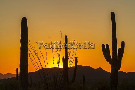 usa arizona saguaro national park sunset