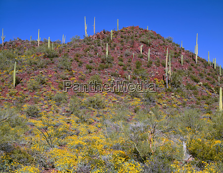 usa arizona saguaro national park tucson