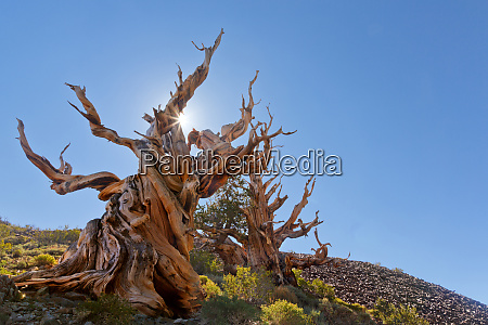 usa california inyo national forest the