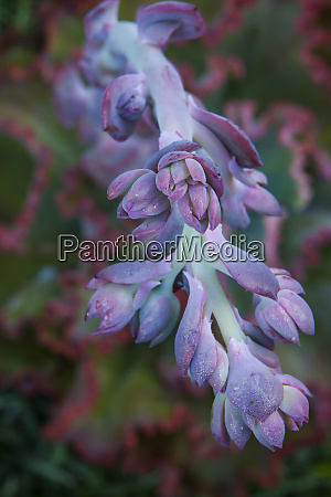 pastel shades of purple in a