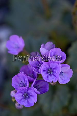 usa california death valley deep purple