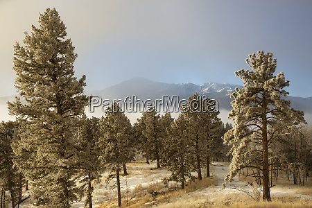 usa colorado pike national forest frost