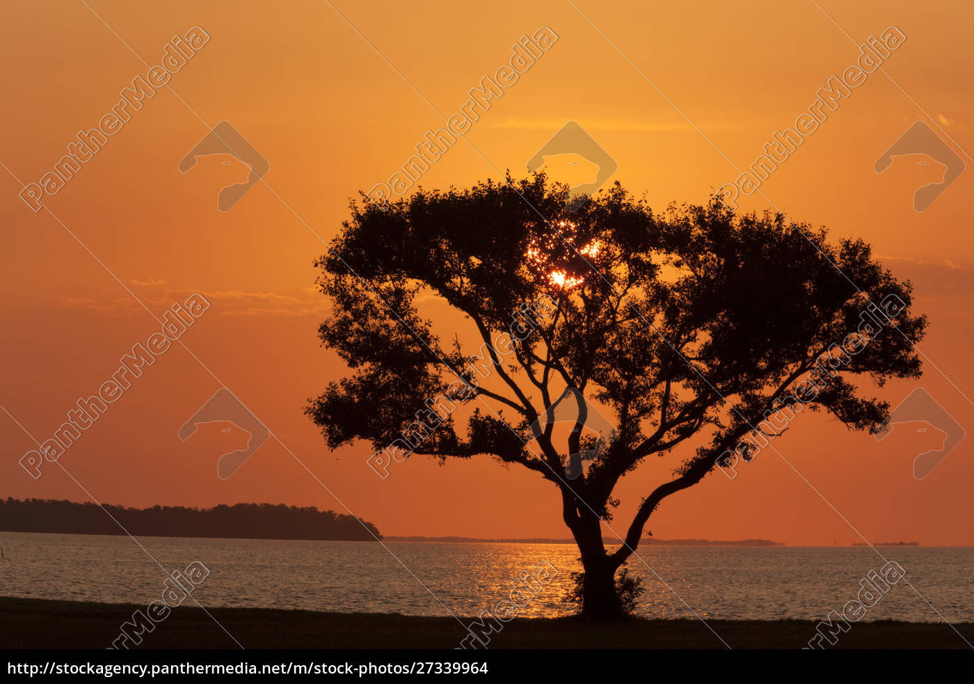 usa, florida, everglades, nationalpark, flamingo, campingplatz., baum, bei, sonnenaufgang - 27339964