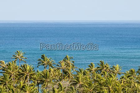 palm trees on west coast oahu