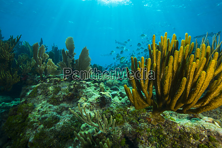 soft coral in the foreground of