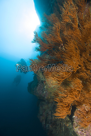 scuba diving on the rarely explored