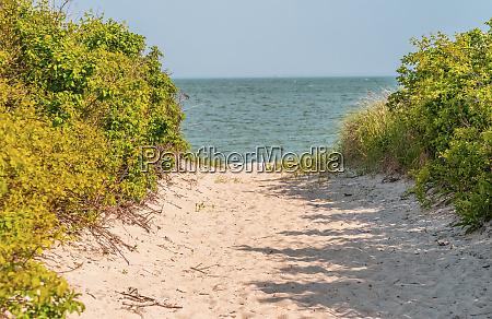 beach path through trees padanaram dartmouth