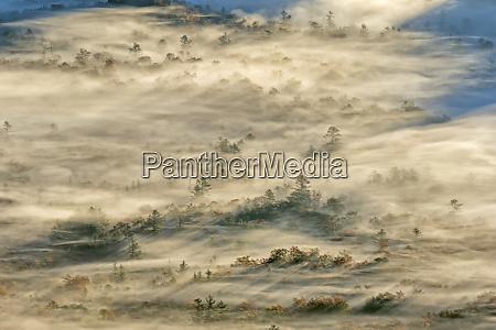 elevated view of fog filled valley