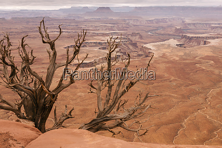 usa utah canyonlands nationalpark weisser rand