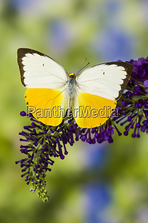 white and yellow butterfly in the