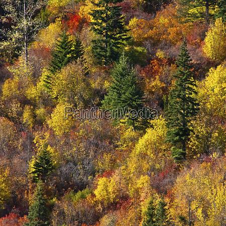 falllaub stevens pass area washington state