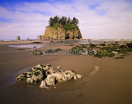 wa olympic national park second beach