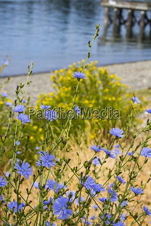 bremerton washington state blue and yellow
