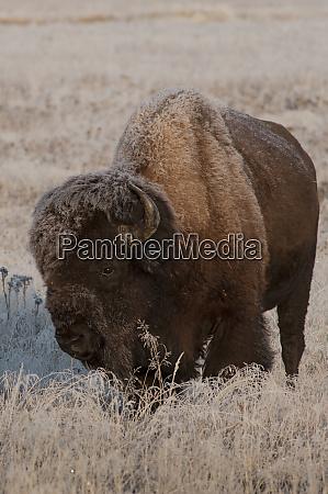 usa wyoming yellowstone national park american