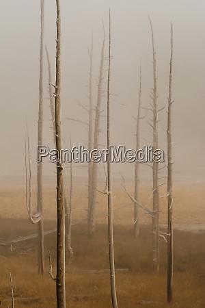 usa wyoming bare trees and fog
