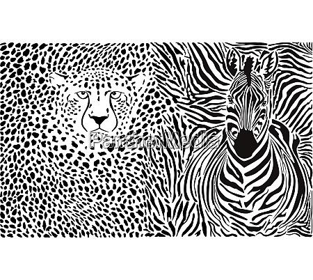 zebra und gepard und muster