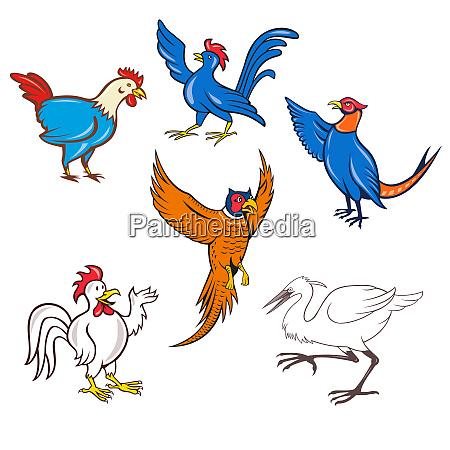 fowl cartoon set