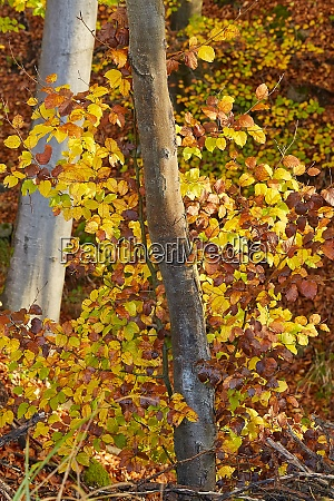 autumn forest fall colors