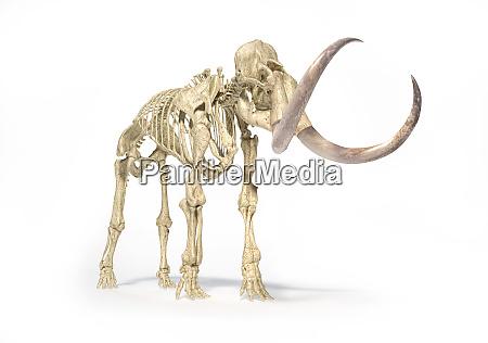 wolliges mammutskelett realistische frontperspektive
