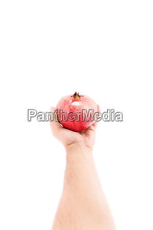 sie moegen granatapfel