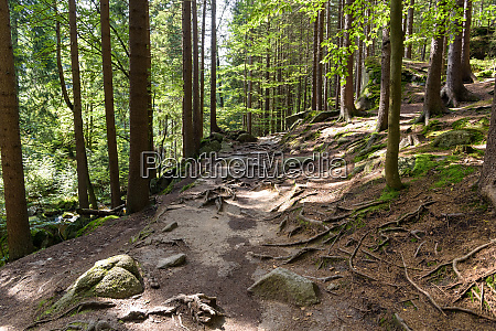 mountain trail in a forest in