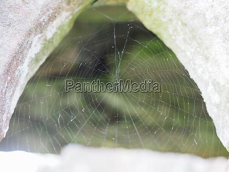 spinnennetz selektiver fokus
