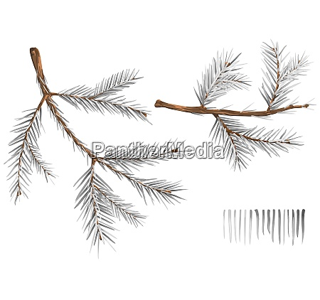 set of wintry spruce branches