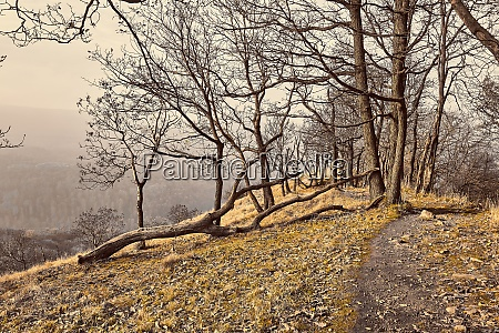 hilly landscape with autumn trees