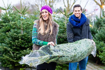 paar traegt gekauften weihnachtsbaum