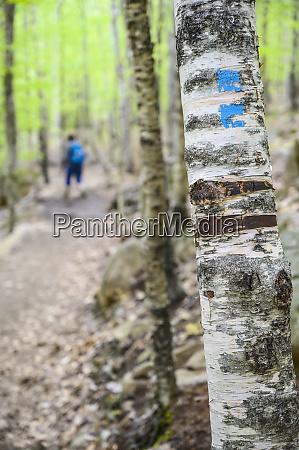 woman hiking behind marking on tree