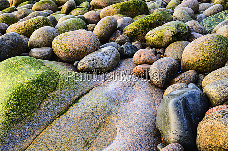 rocks on beach in acadia national