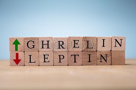 ghrelin und leptin worte auf holz