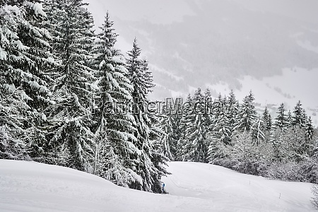 winter verschneite berglandschaft